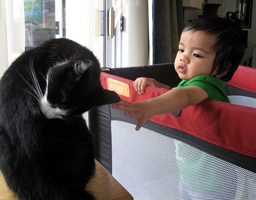 Perros para ni os mascotas para ni os en casa - Perros para tener en casa ...