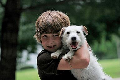 Mascotas: Tener un perro en casa